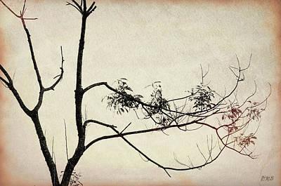 Photograph - Tree Branches IIi by David Gordon