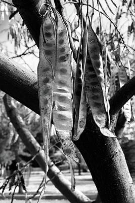 Photograph - Autumn Beans In Arizona Bw by Tatiana Travelways
