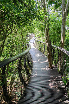 Photograph - Tree Canopy Walkway At Kirstenbosch National Botanical Garden by Rob Huntley