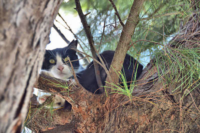 Photograph - Tree Cat by JAMART Photography