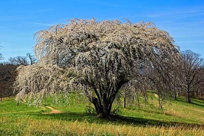 Photograph - Tree Celebration by Allen Nice-Webb