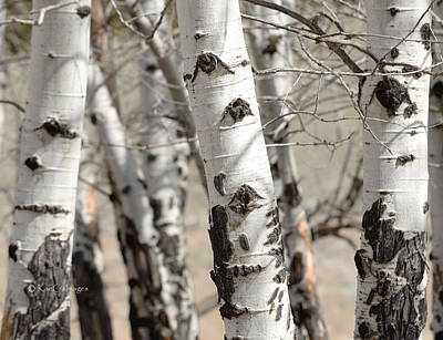 Photograph - Tree Eyes by Kae Cheatham