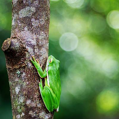 Photograph - Tree Frog And Bokeh by Keith Smith