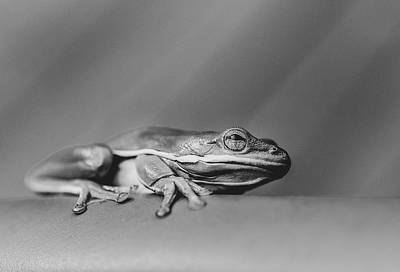 Photograph - Tree Frog Bw by Keith Smith