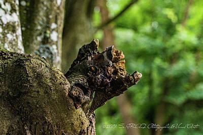 Photograph - Tree Goblin  by Sven Graf