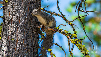 Winter Animals - Tree Hopping by Stan Townsend