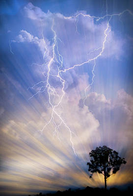 Photograph - Tree In A Lightning Storm by Debra and Dave Vanderlaan