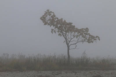 Photograph - Tree In Fog by William Selander