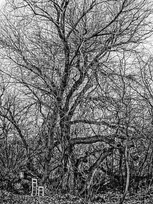 Tree In Nature Park / The Chair Project Art Print
