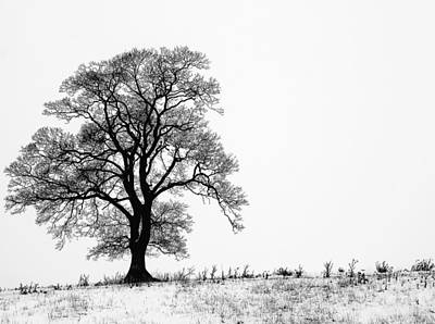 Photograph - Tree In Snow by Shelly Chapman