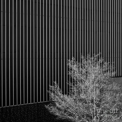 Photograph - Tree In The City by Patrick M Lynch