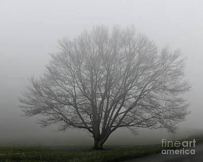 Photograph - Tree In The Fog - 2 by Kerri Farley
