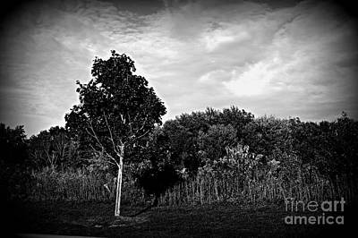 Frank J Casella Royalty-Free and Rights-Managed Images - Tree In The Golden Hour Prairie by Frank J Casella