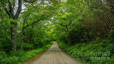 Photograph - Tree Lined Country Road by Tom Claud