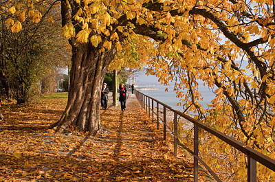 Photograph - Tree-lined Promenade Along Shore Of The by Glenn Van Der Knijff