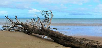 Landscape Wall Art - Photograph - Tree Meets Beach by Joan Stratton