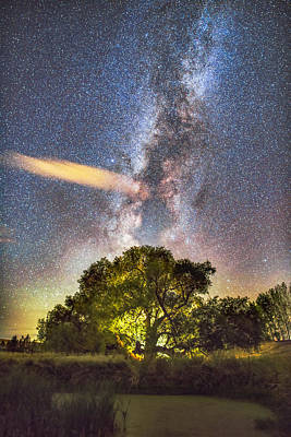 Wall Art - Photograph - Tree Of Life by Jeremy Tamsen