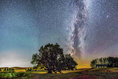 Wall Art - Photograph - Tree Of Life Panoramic by Jeremy Tamsen