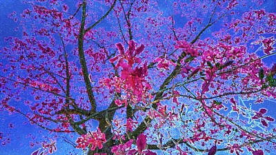 Photograph - peek into the Tree Of Passion - Fuel My Soul v7 by Kenneth James