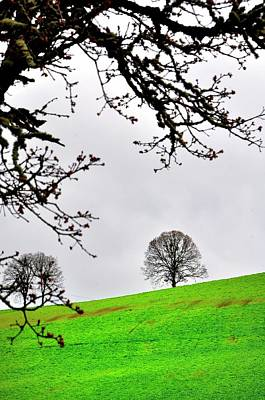 Photograph - Tree On Green by Jerry Sodorff