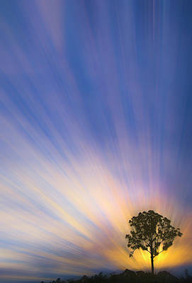 Photograph - Tree On The Hill by Debra and Dave Vanderlaan