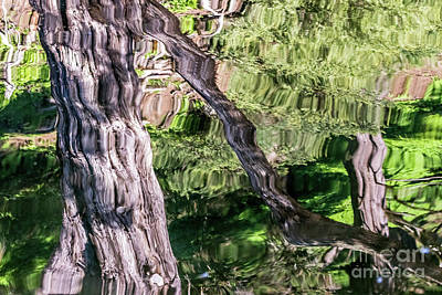 Photograph - Tree Reflected by Kate Brown