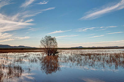 Tree Reflection At Whitewater Draw Original