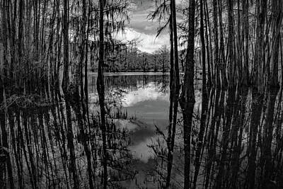 Photograph - Tree Reflections #5 by David Heilman