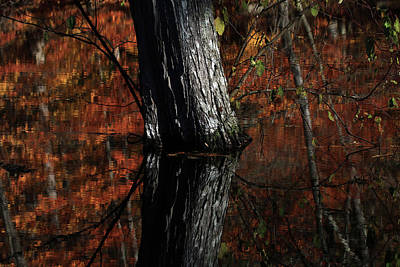 Photograph - Tree Reflects In The Pond by Karol Livote