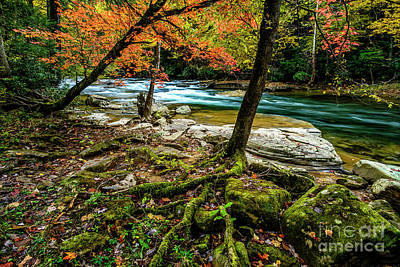 Photograph - Tree Roots By River by Thomas R Fletcher