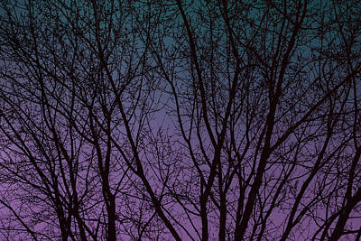 Digital Art - Tree Silhouette Against Blue And Purple by Jason Fink