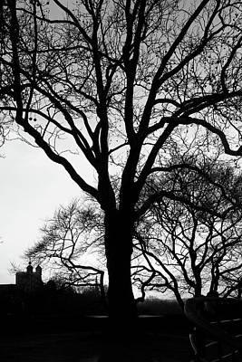 Photograph - Tree Silhouette At Greenwich Park, London by Aidan Moran