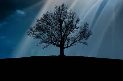 Photograph - Tree Silhouette, Upstate New York by Shobeir Ansari