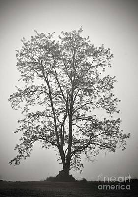 Abstract Shapes Janice Austin - Tree Silhouetted Against Fog by Cindy Treger