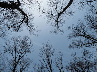 Photograph - Tree Silhouettes by Jean Noren