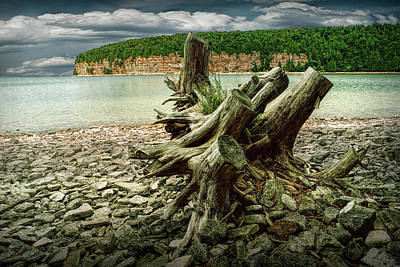Photograph - Tree Stump At Fayette Michigan State Park In The Upper Peninsula by Randall Nyhof