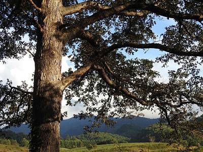 Photograph - Tree With a View by Kathy Ozzard Chism