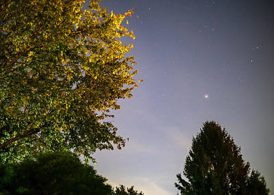 Photograph - Trees And Stars by Jason Fink