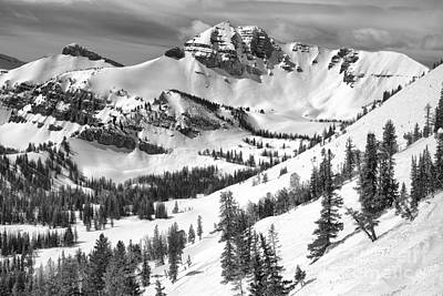 Photograph - Trees At Rendezvous Peak Black And White by Adam Jewell