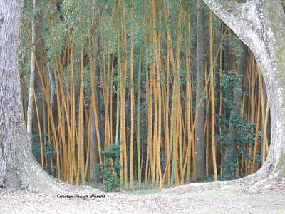 Wall Art - Photograph - Trees Frame Bamboo by Carolyn Hebert