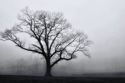 Photograph - Trees In Fog # 2 by Allen Beatty