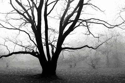 Photograph - Trees In Fog by Allen Beatty