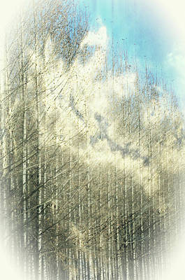 Photograph - Trees In The Clouds by Tikvah's Hope