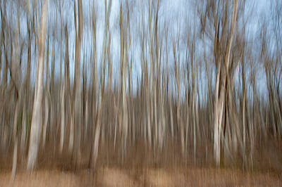 Photograph - Trees In The Forest by Mark Duehmig