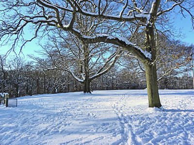 Photograph - Trees In The Snow by Lachlan Main