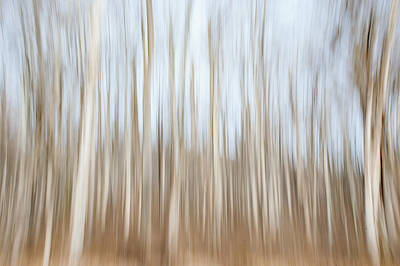 Photograph - Trees On The Move by Mark Duehmig