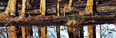 Photograph - Trees Reflected At Sunrise by Jerry Sodorff