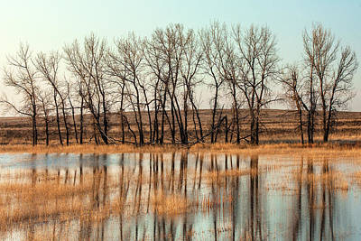 Photograph - Trees Reflected by Todd Klassy
