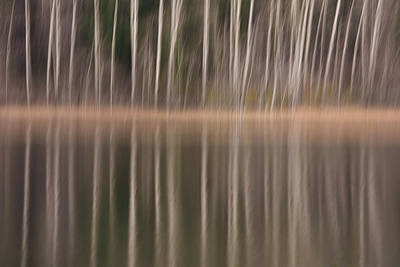 Photograph - Trees Reflection In A Pond by Yulia Kazansky