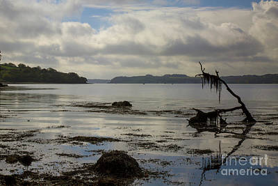 Photograph - Trelissick Beach Dead Wood by Brian Roscorla